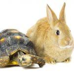 Er du en hare eller en skilpadde?